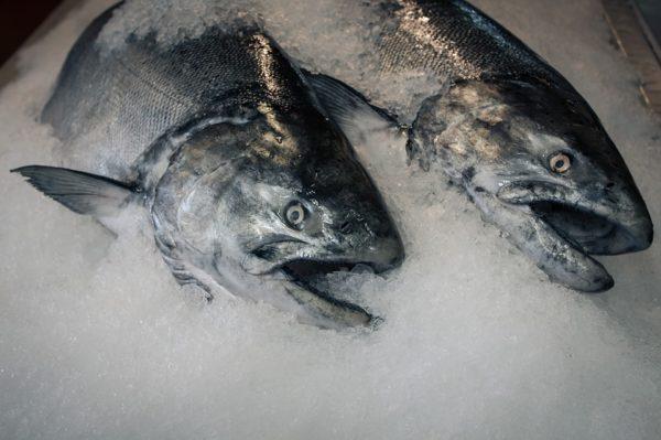 Prodotti della pesca congelati