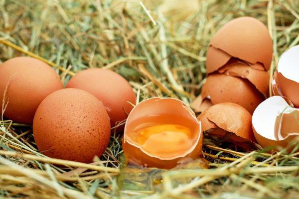 Uova conservazione e prevenzione